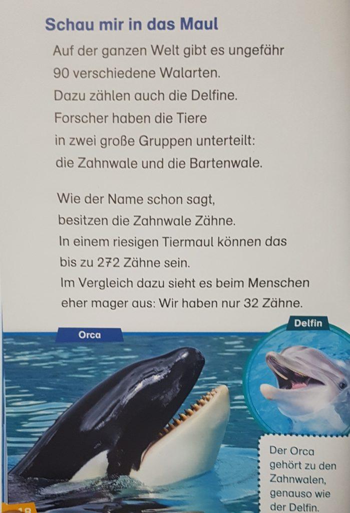 Eine Beispielseite aus dem Buch Erstes Lesen - Wale und Delfine
